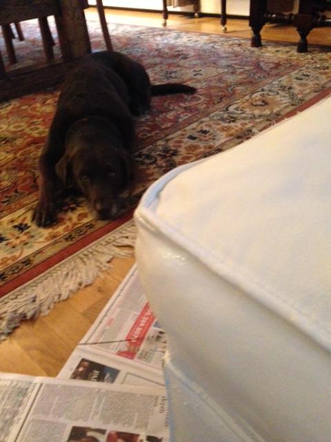 Tillie Helping Me Paint